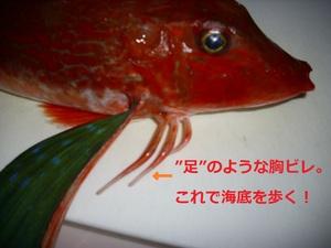 Houbouashi3